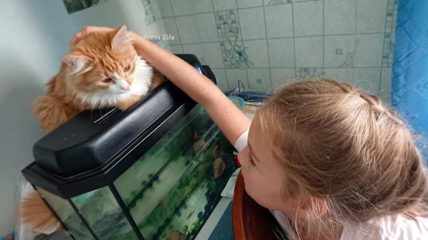 Кот Малыш 20.jpg