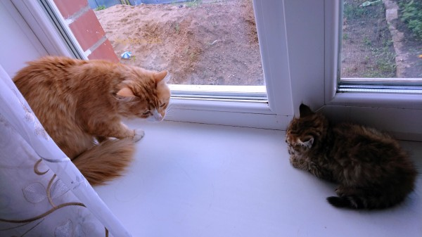 1 Эмилия соседский котёнок 2.jpg