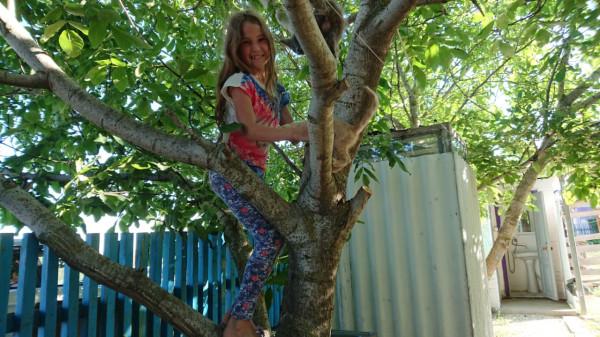 Дерево с котятами:)