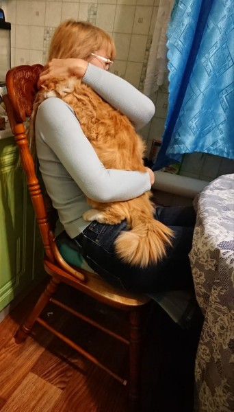 Когда приходишь домой поздно, а по тебе скучает котик IMG-20201119-WA0033.jpg