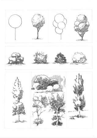 деревья упражнение веб