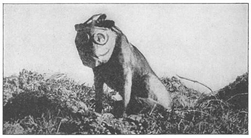 Dog_with_mask_WWI