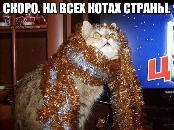 Поздравление с новым годом от котика фото 799