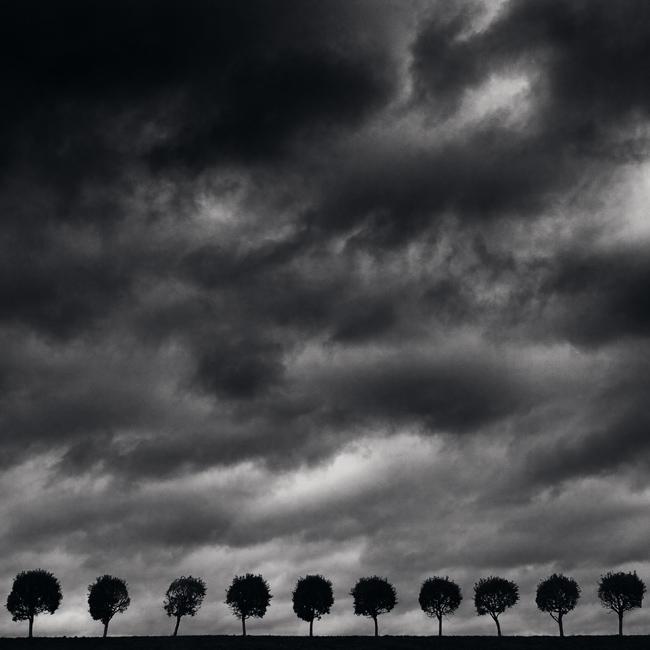 ten_trees