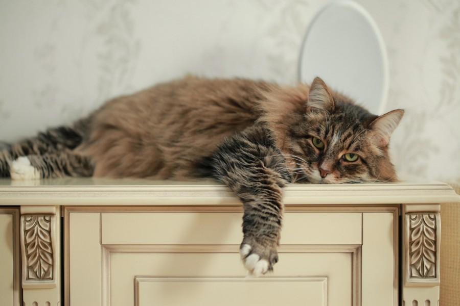 котик, флегматик