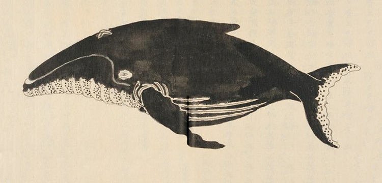 книга про охоту на кита