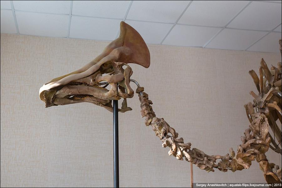 как заново собирают скелеты динозавров