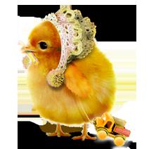 B-B-Bird_212x212_5 (1)