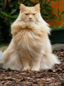 Навальный кот