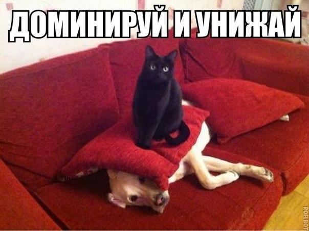 доминируй_унижай