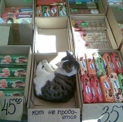 кот_не_продается