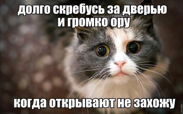 типичный_кот