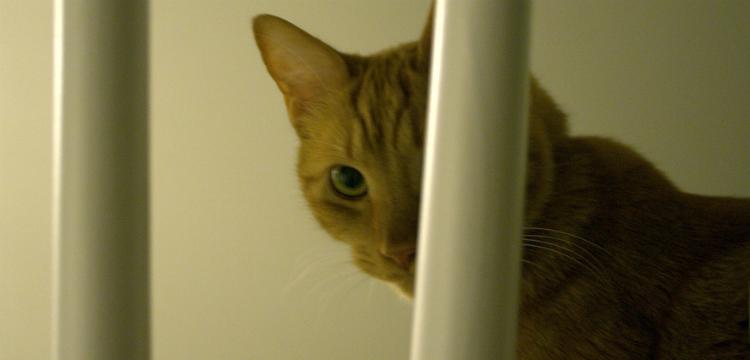 Паранормальный кот и боязнь ночевать в одиночестве