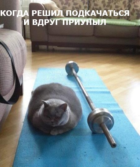 Пятничные котики