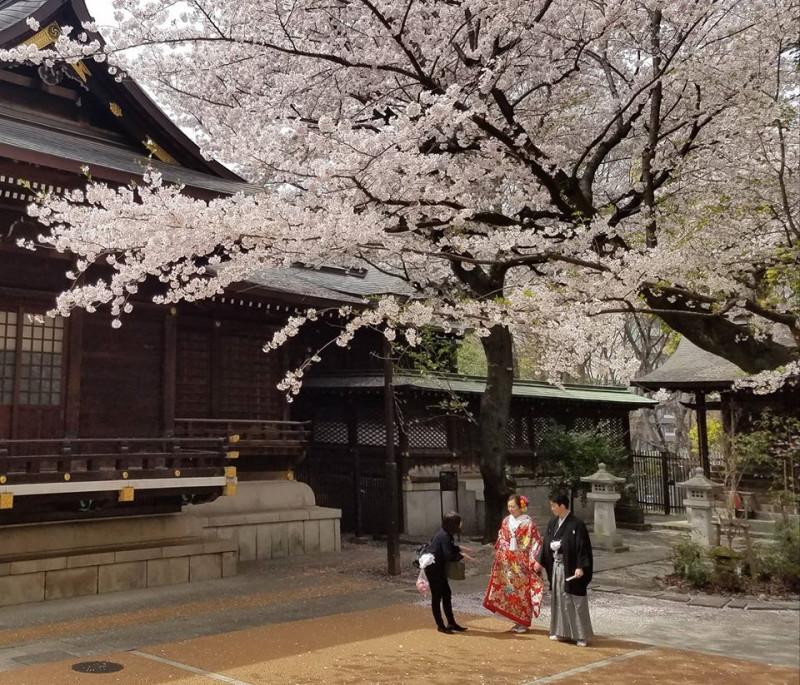 Съемки свадебной рекламы в токийском храме Кумано-дзиндзя. Считается, что боги именно этого храма создают наиболее крепккую кармическую связь «эн» для брака