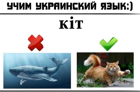 Украинский и молдавский язык в картинках