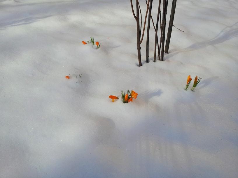 Немножко несостоявшейся весны