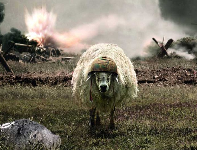 The-Sheep-of-War-672.jpg