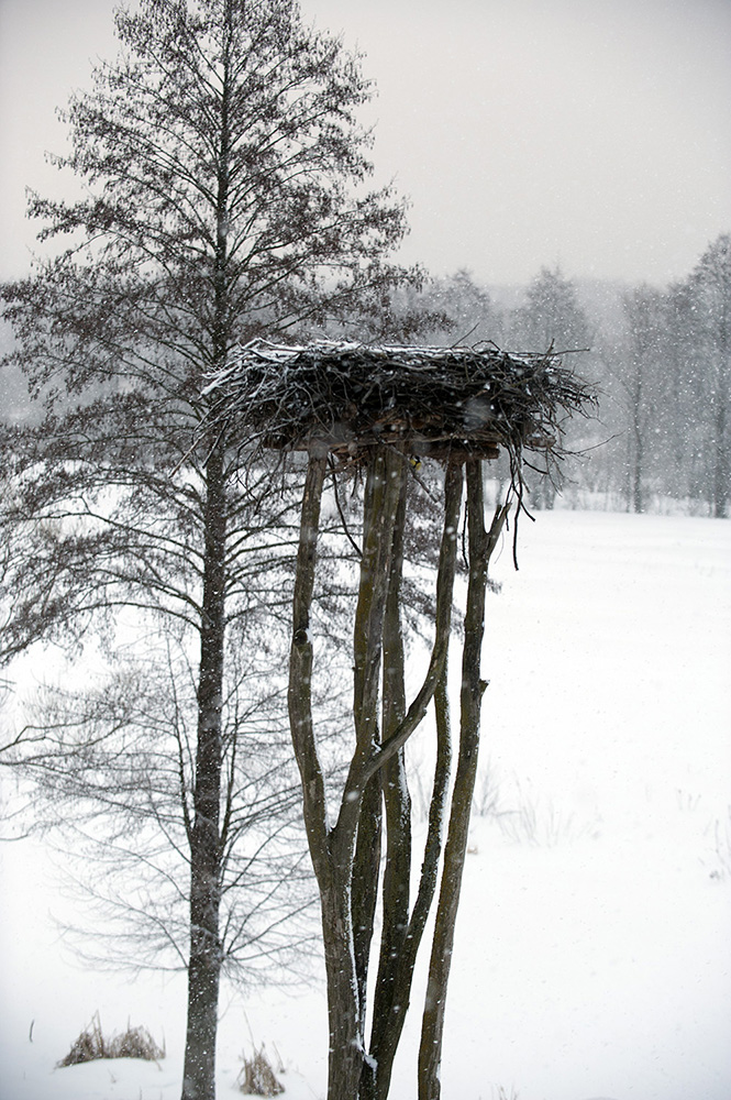 Photo © Igor Shpilenok