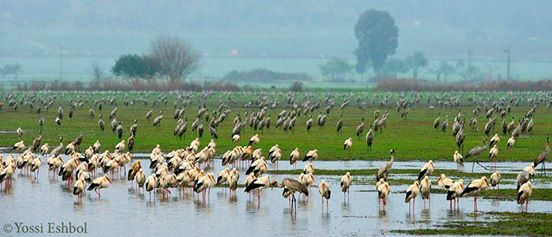 storks israel