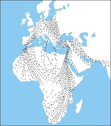 map storks