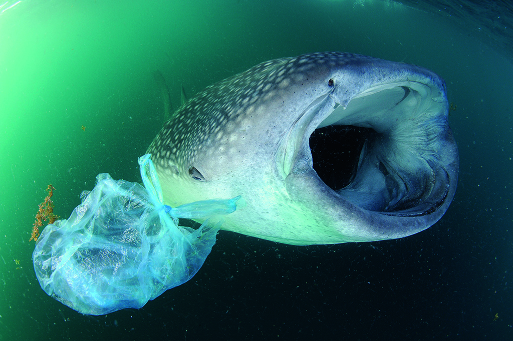 whale-shark-plastic1