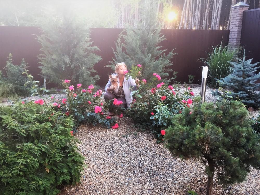 Пьер-де-Ронсар, роза сама нежность. Но что -то ей у меня не нравится, нарастает слабо.