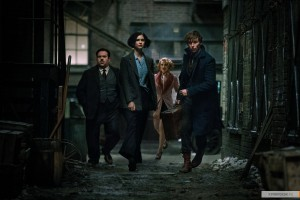 kinopoisk.ru-Fantastic-Beasts-and-Where-to-Find-Them-2798170