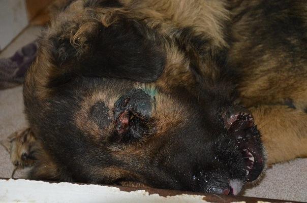 Глава администрации Бокинского сельсовета Верещагин Ю.М. жестоко убил бездомную собаку.