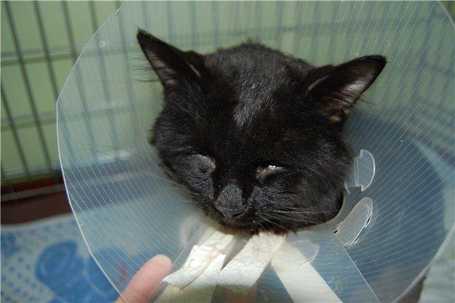 Изрубленный кот. Мусарная закрыла уголовное дело.