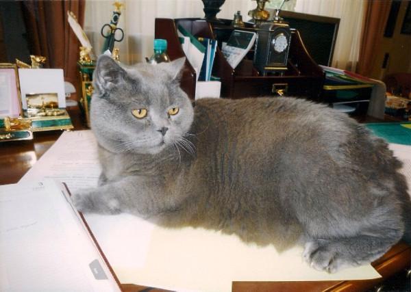 кот Агат Сергея Миронова