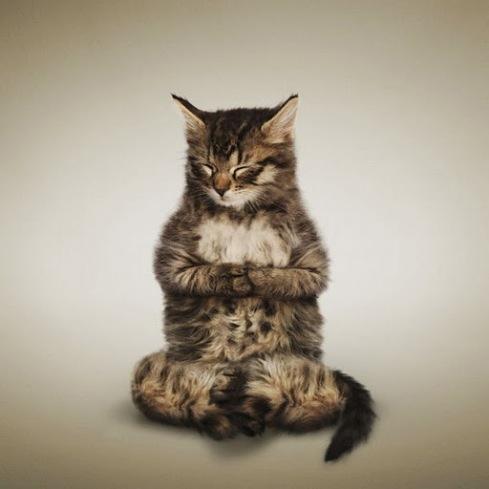 wwwdtrendingcom_funny_yoga_kittens2028629