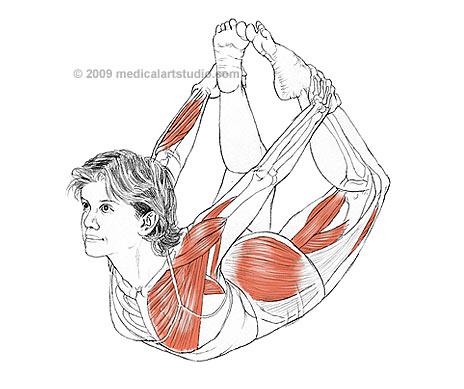 yoga-anatomy-2