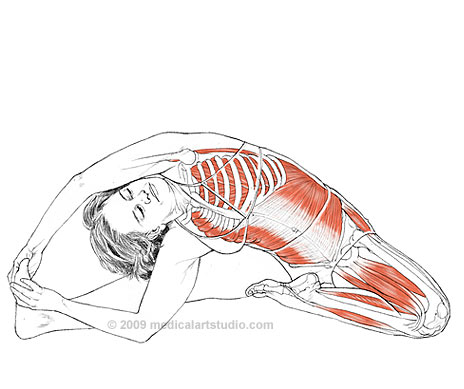 yoga-anatomy-3