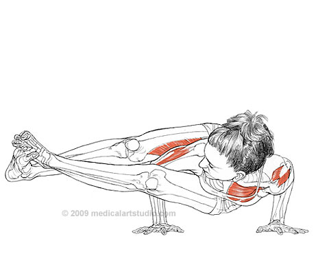 yoga-anatomy-4