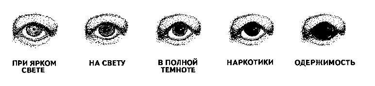 Реакция человеческого зрачка