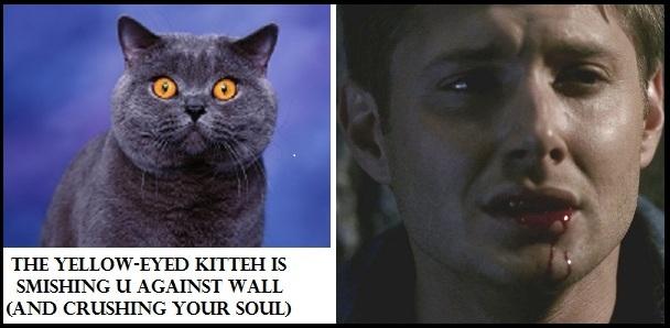 S1_kitteh