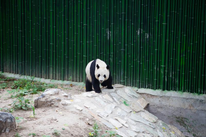 China 2015-122.jpg