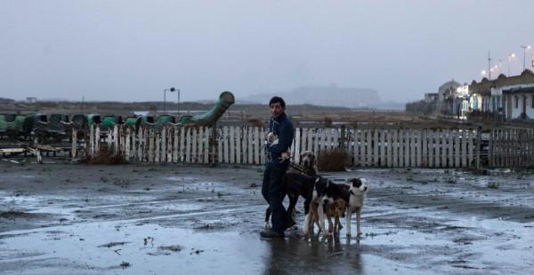 dogman-2-1120x580