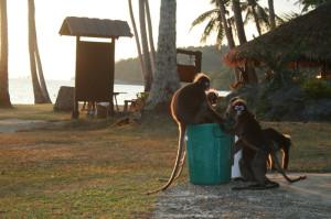monkeys-and-sunrise