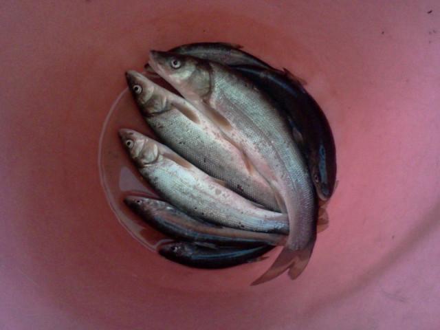 рыбалка на сучане