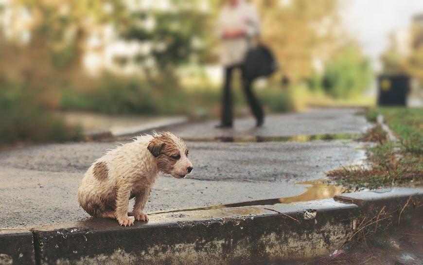 Фото Ивана Кузнецова.