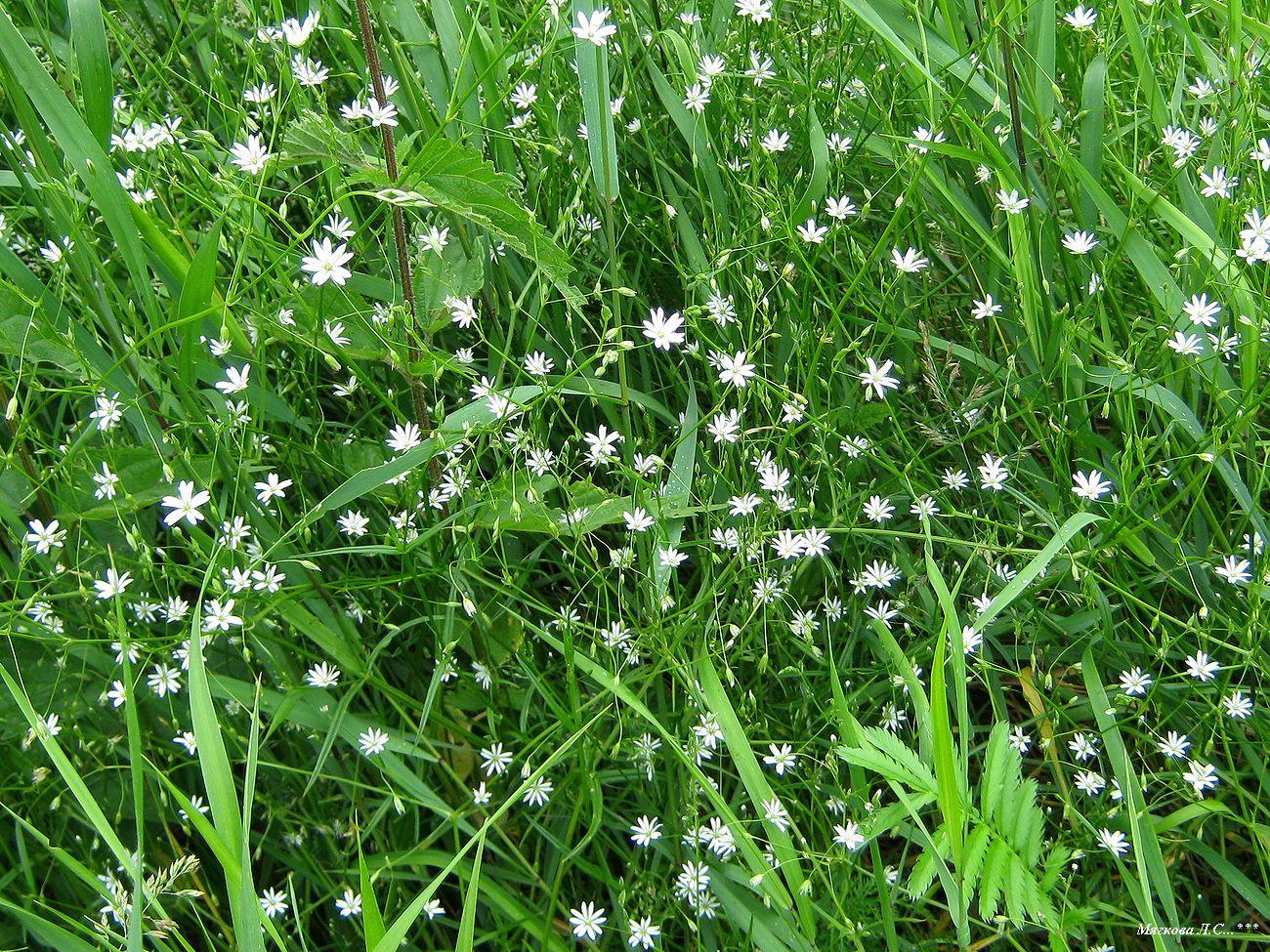 00 звёзды в траве _6367.jpg