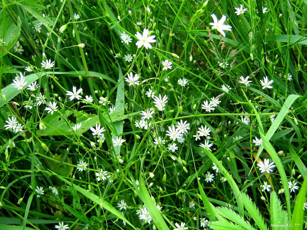 00 звёзды в траве _6364.jpg