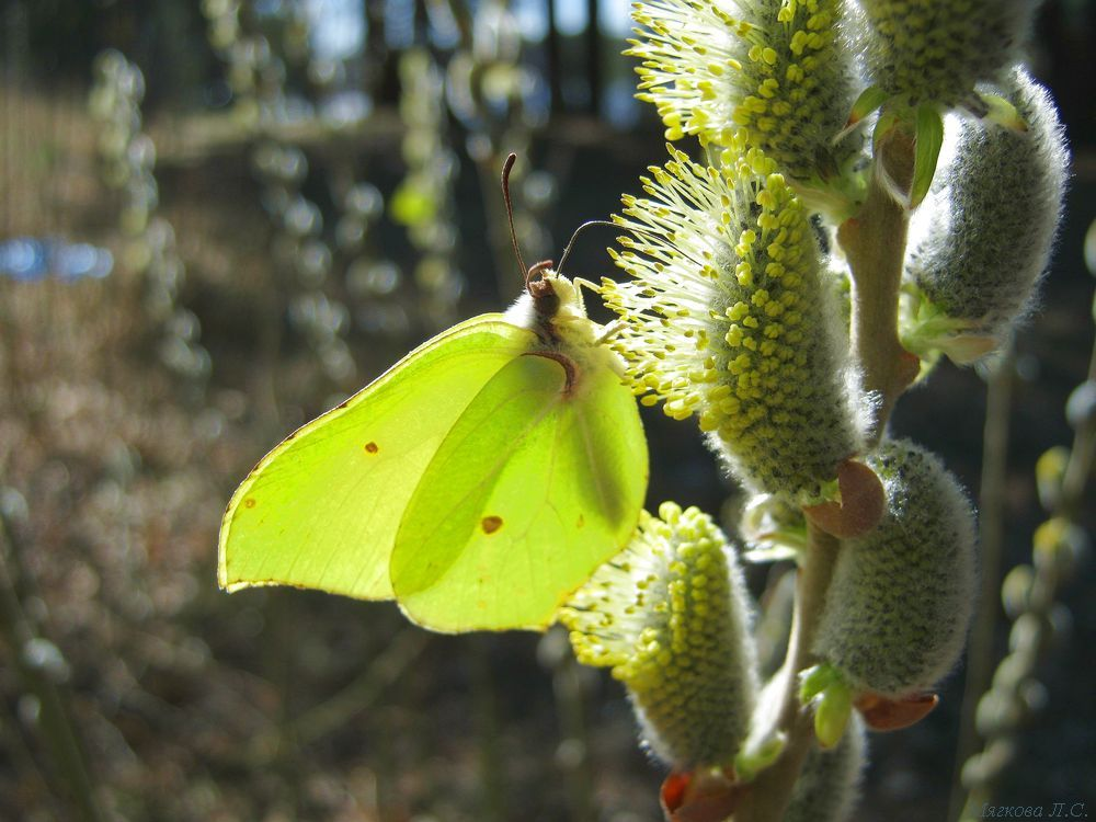 бабочка1.jpg