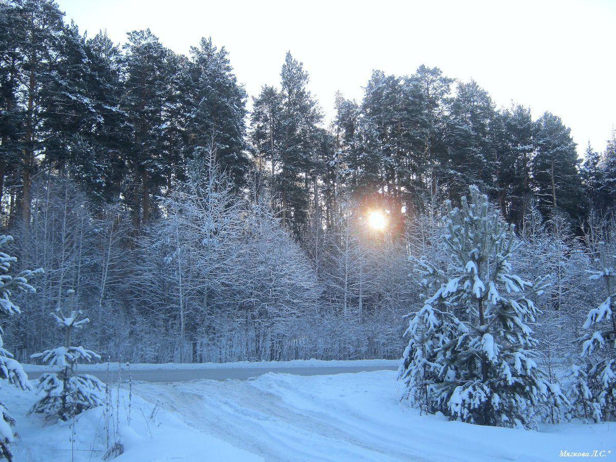 зимний лес 1200.jpg