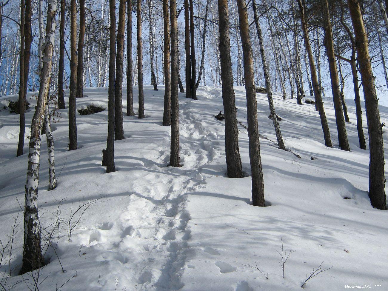 01 склон из леса _0214.jpg