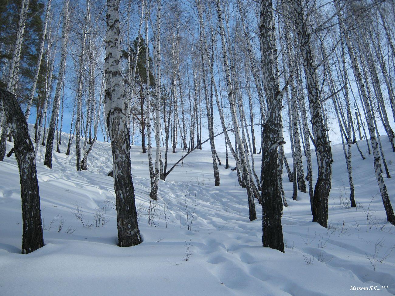 01 склон из леса _0237.jpg