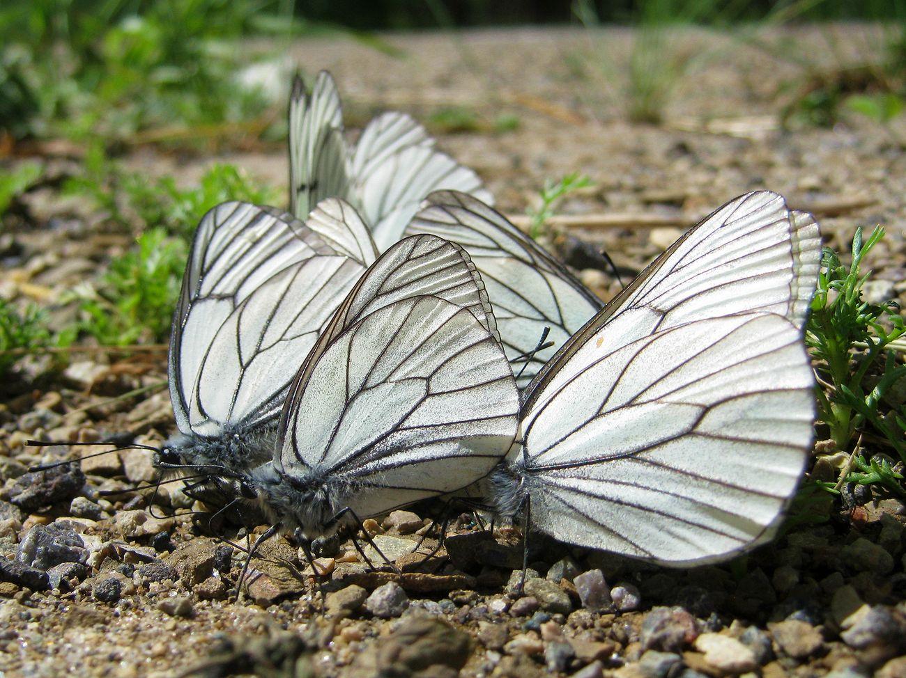 00 бабочки _5921.jpg