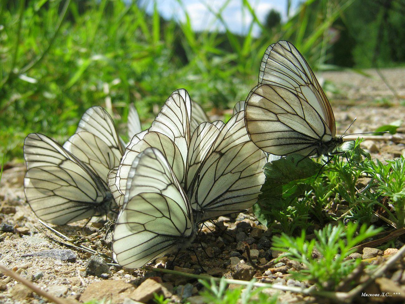 00 бабочки1 _5876.jpg